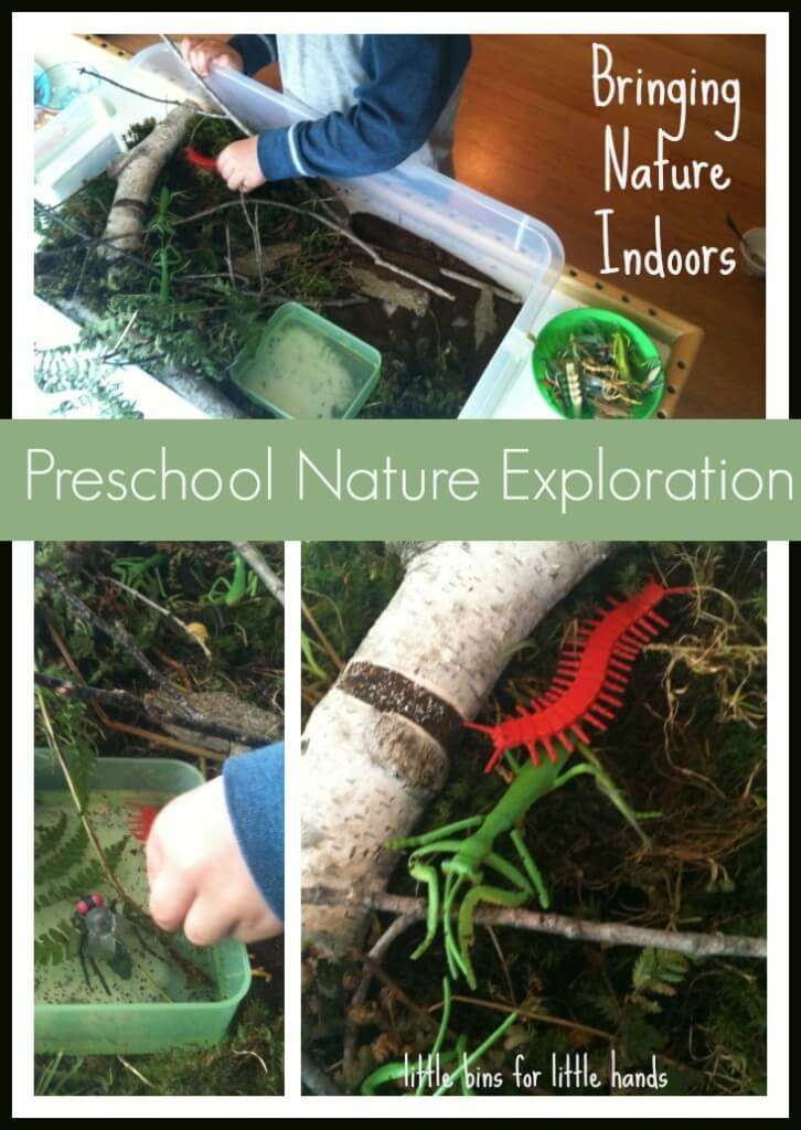 Nature Sensory Bin & Activities to lear about bugs and more!