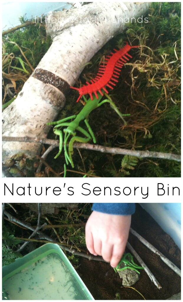 Nature sensory bin outdoor sensory bin bug sensory bin