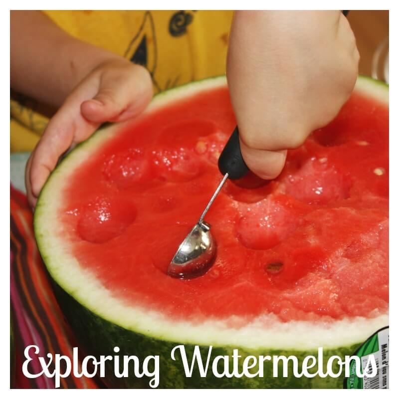 Exploring Whole Watermelons