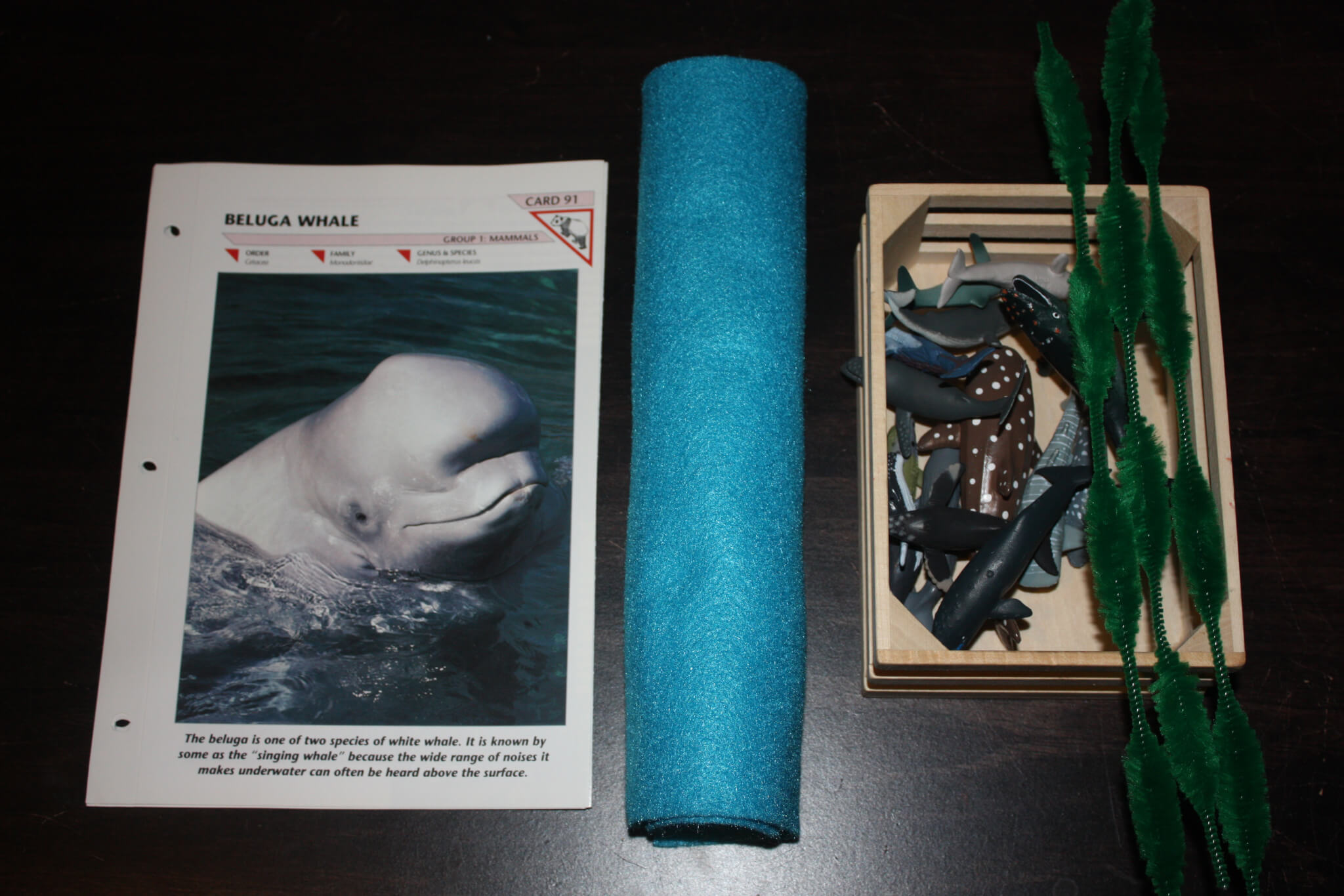 whales u0026 water ocean theme activities preschool