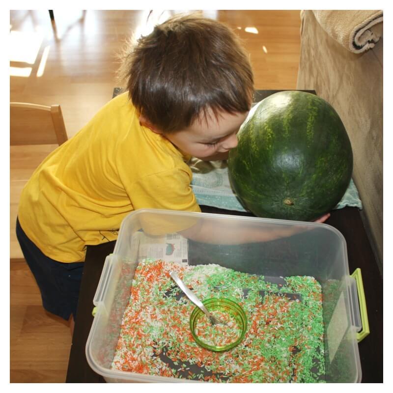Watermelon Rice Sensory Bin Watermelon Sensory Play