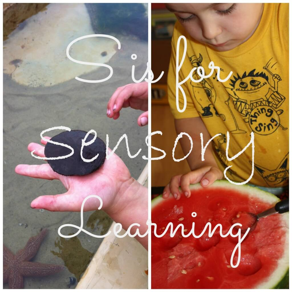 s is for sensory learning cover text