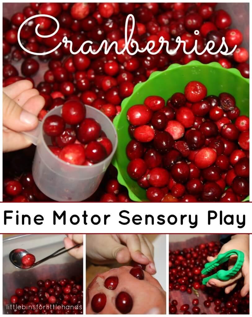 Cranberry Fine Motor Skills Sensory play
