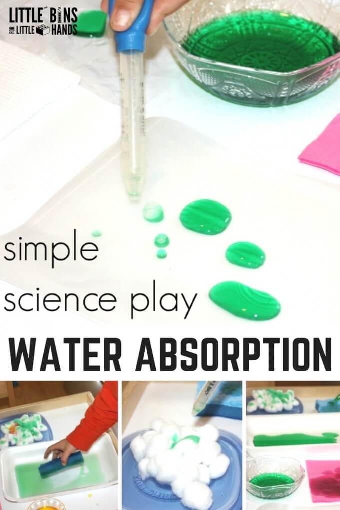 Preschool water science and water absorption science activity for kids.