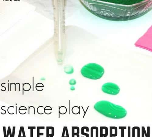 Water Science Experiment Exploring Absorption