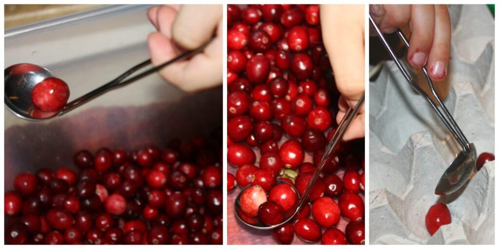 cranberry fine motor skills mini ladle scooping