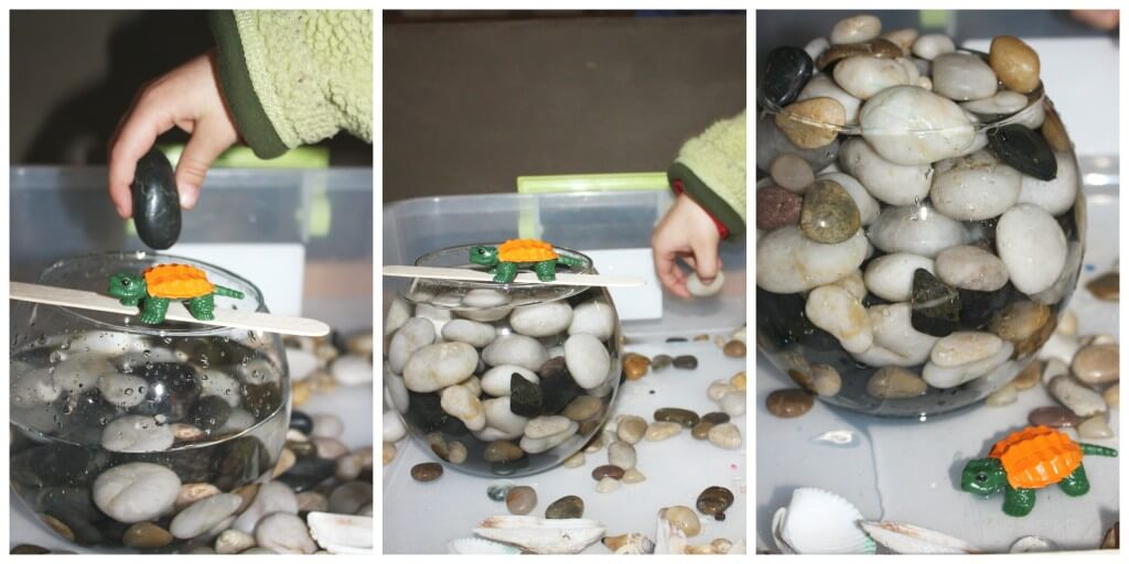 water displacement science experiment turtle  and rocks