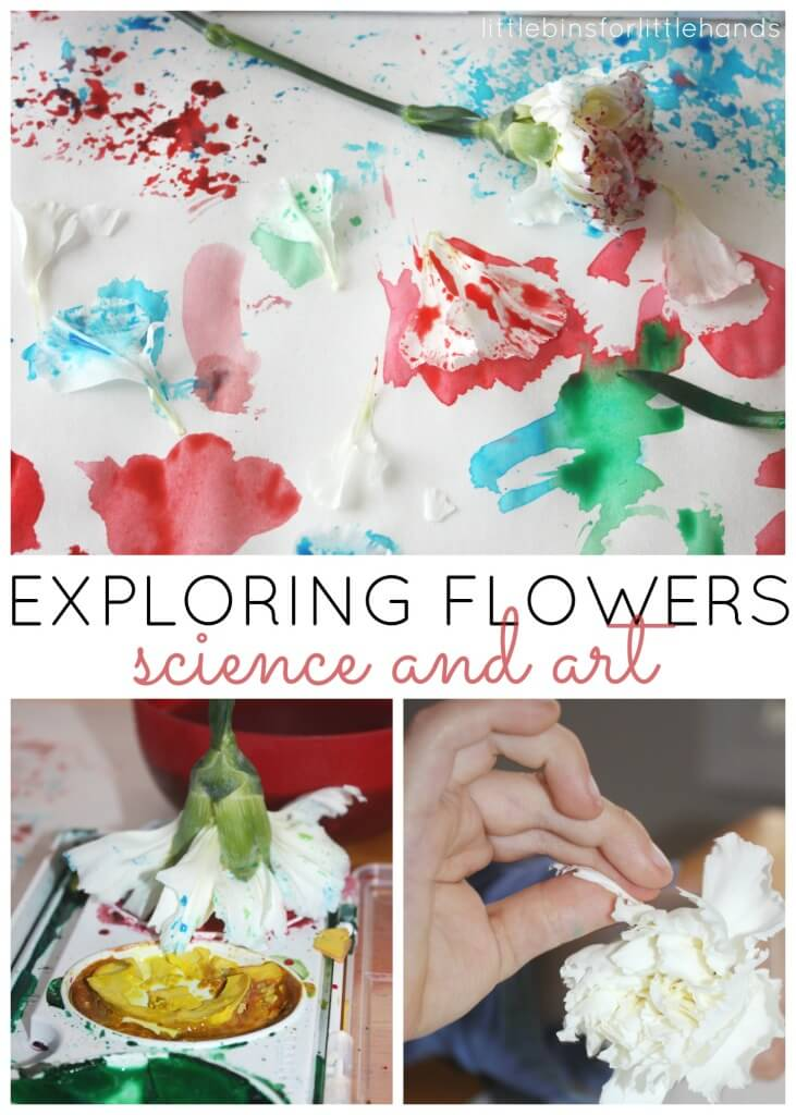 Flower science art activity exploring flowers painting with flowers