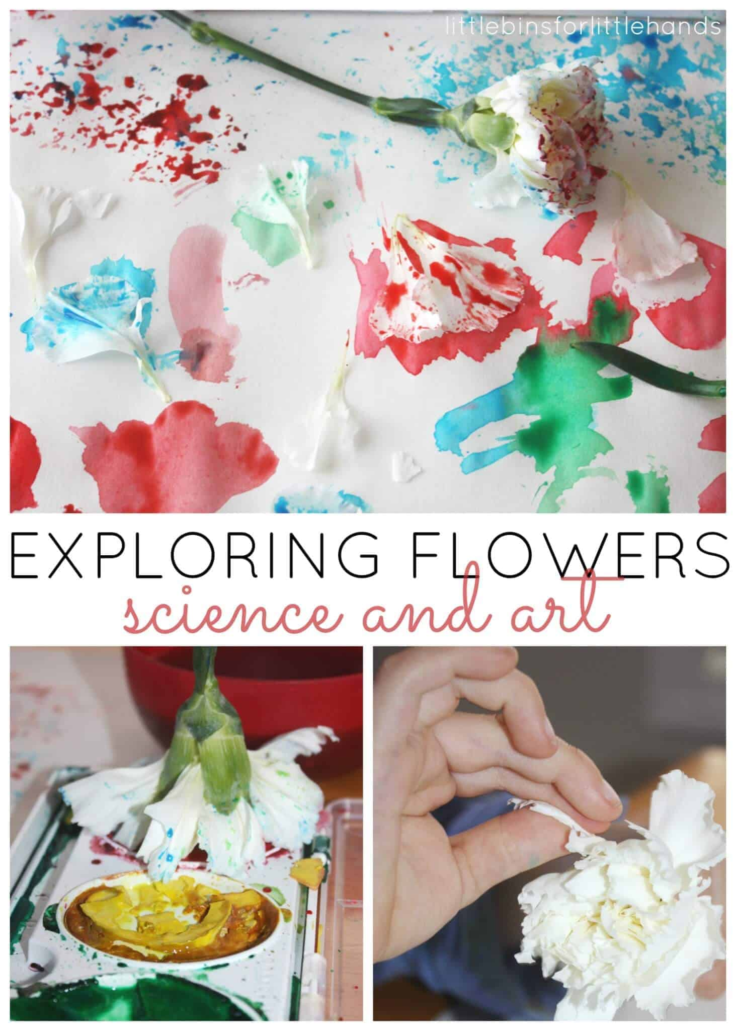 Flower Science and Art Activity for Kids
