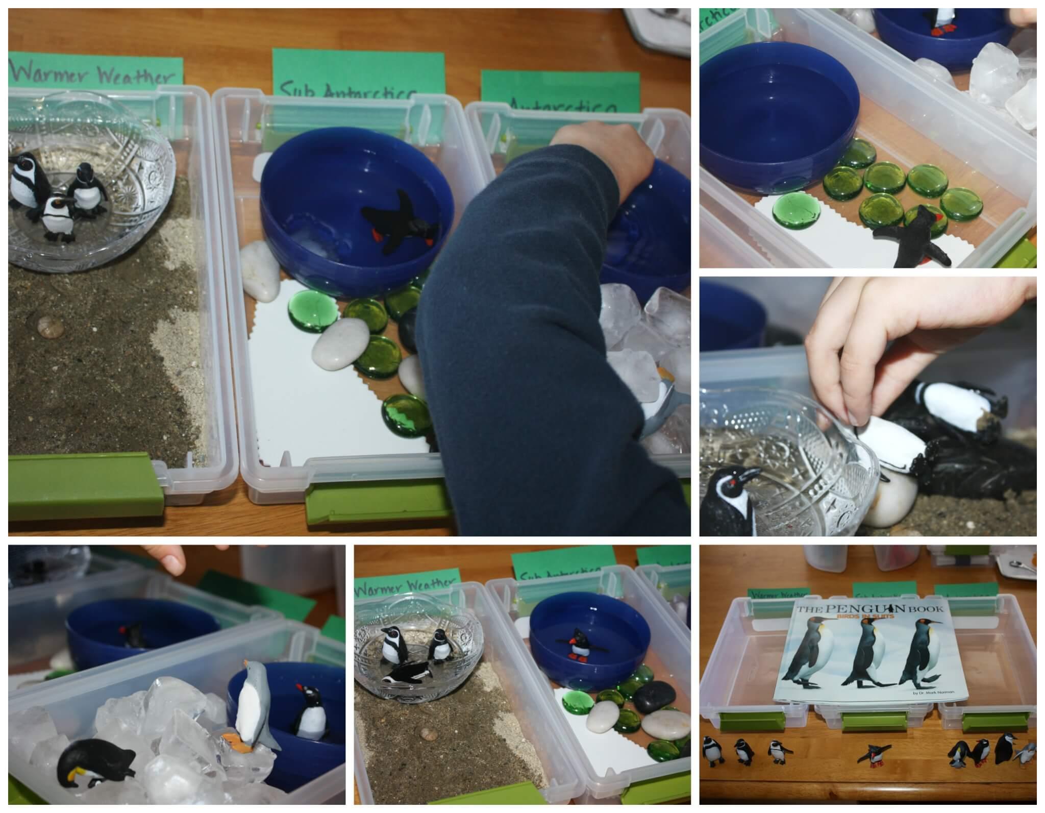 Penguin Activities For Preschool Little Bins For Little Hands