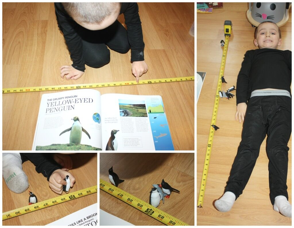 penguin measuring activity