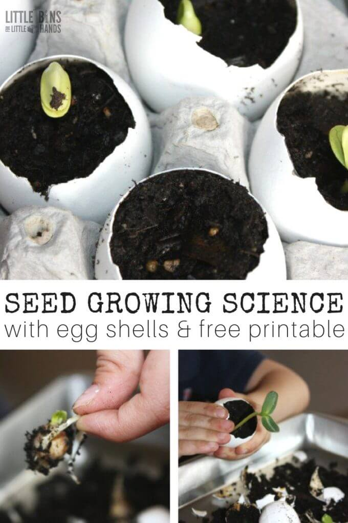 Egg Shell Seed Growing Science Activity and Spring Science for Kids