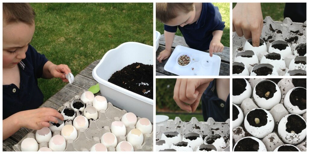Egg Shell Seed Growing Planting Seeds for Spring Science