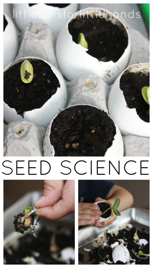 Egg Shell Seed Growing Spring Science Activity