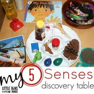 5 senses activity for preschool science exploring the senses see hear touch sight smell activities