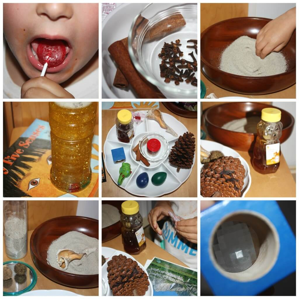 5 senses activity touching tasting smelling hearing seeing