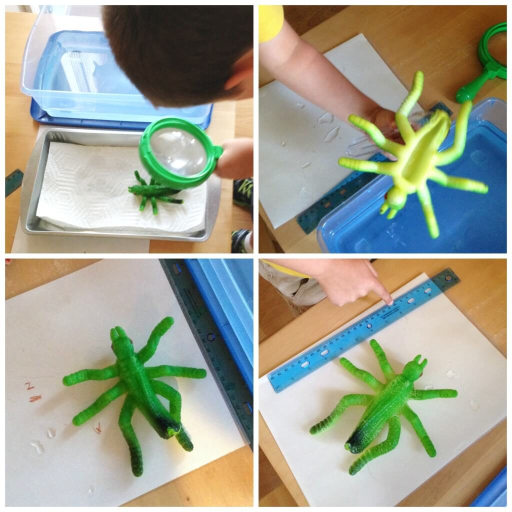 dollar store science results of growing animal observing examining
