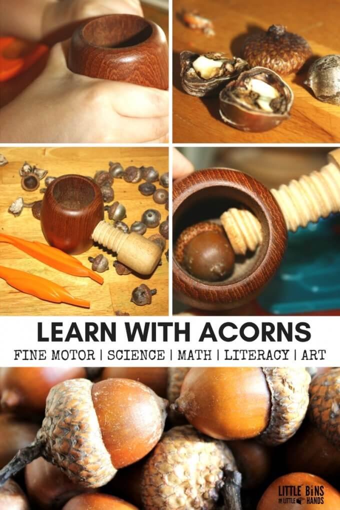 Acorn Fine Motor Activities