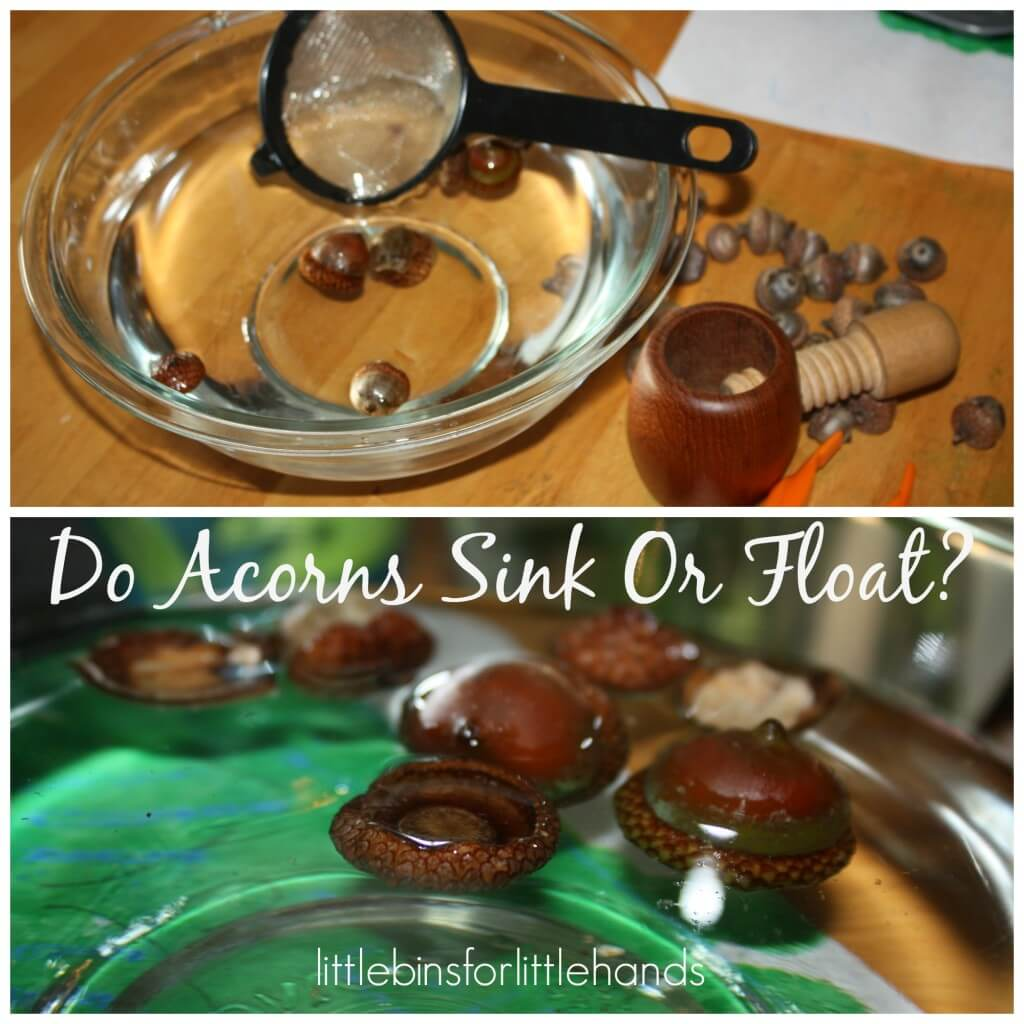 Acorn Fine Motor Fall Sensory Science Sink Or Float