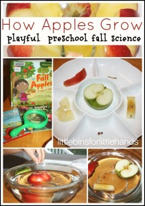 Apple Science Activity How An Apple Grows