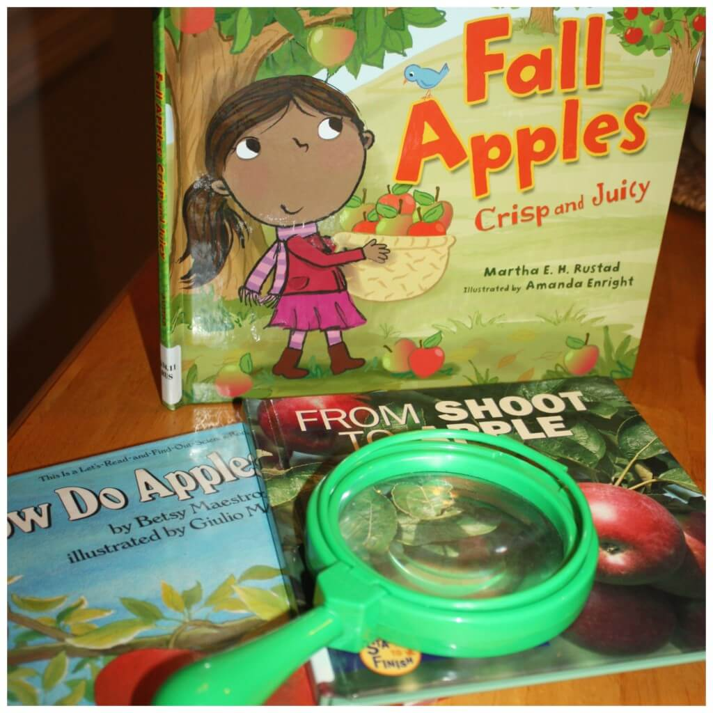 Apple Science Activity How An Apple Grows Favorite Books