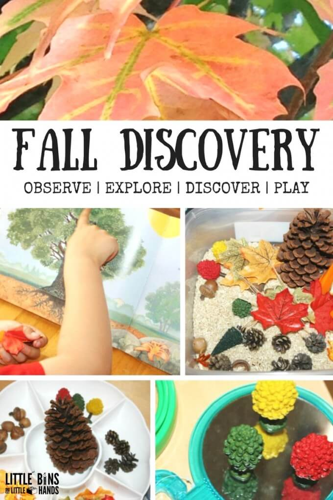 Fall Activity Discovery Table Leaves Changing Seasons