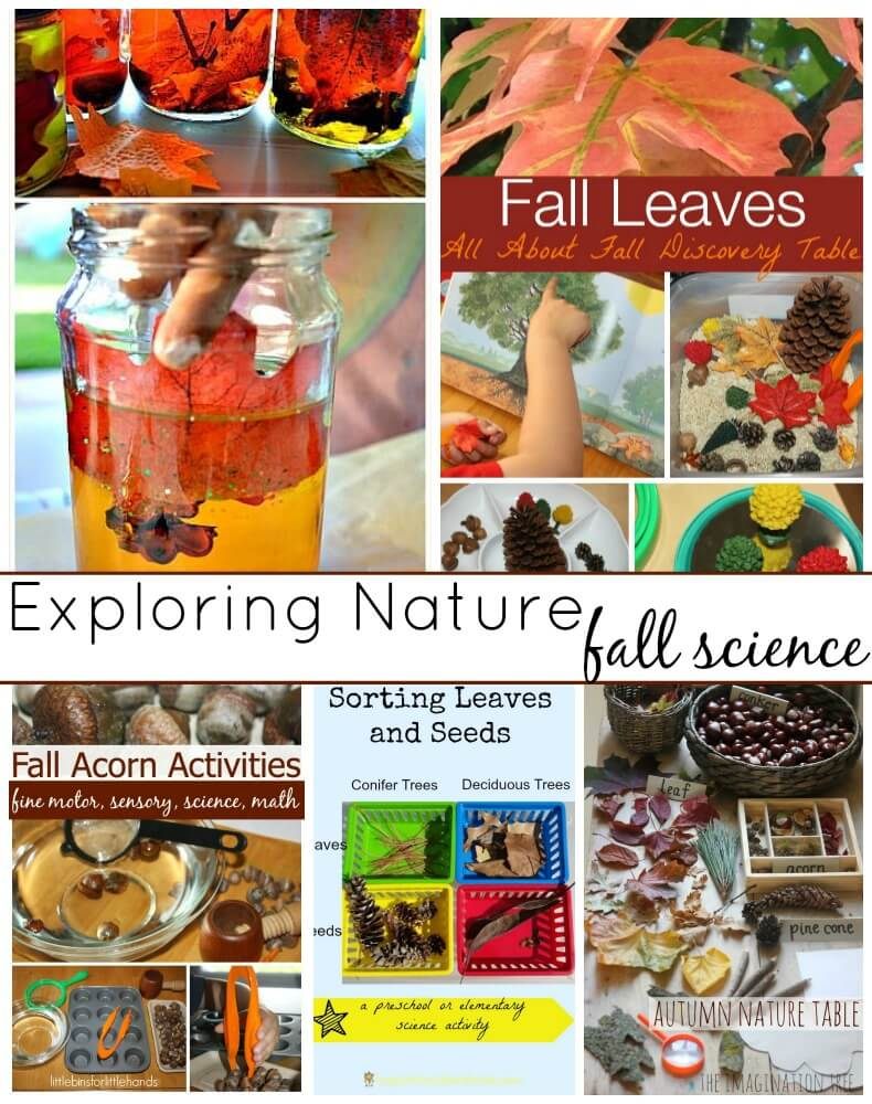 Fall science sensory exploring nature