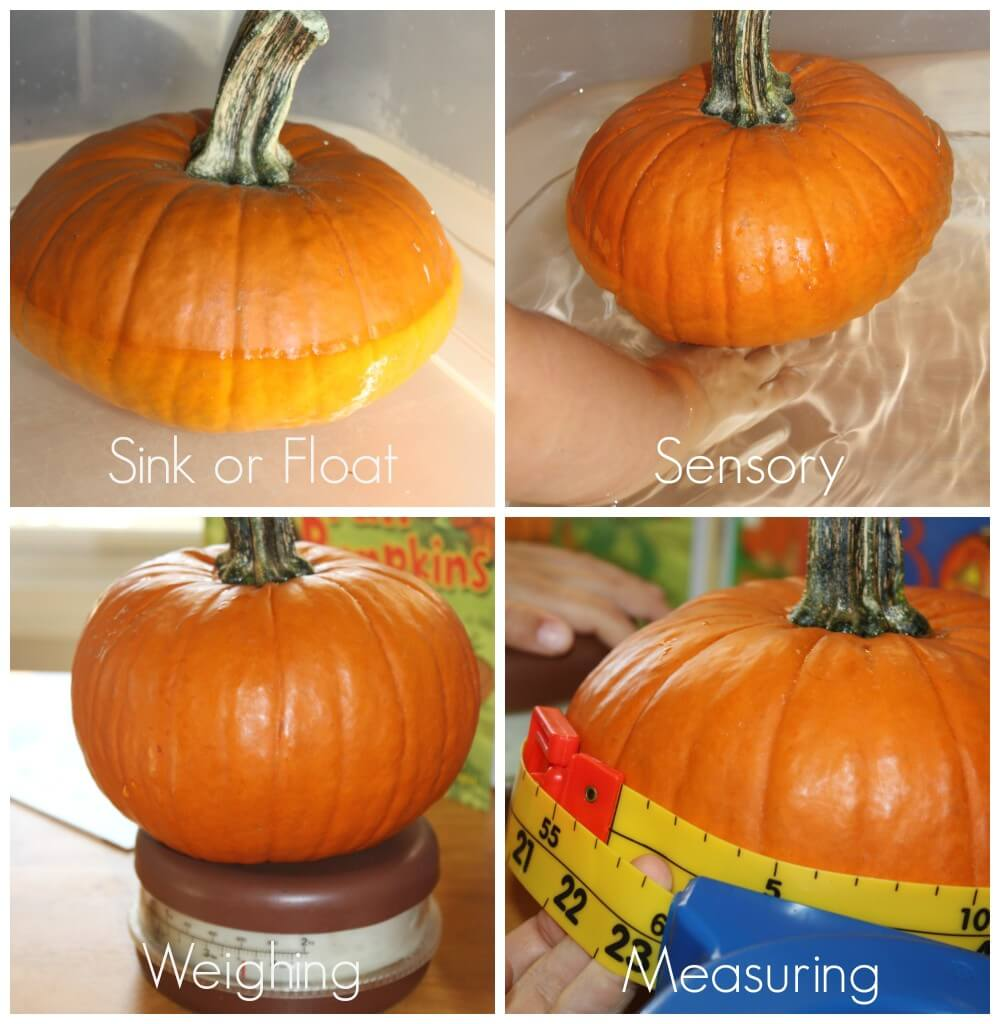 Pumpkin Activities For Preschool sink float measure sensory weighing