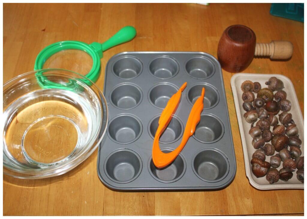 acorn fine motor fall sensory play activity set up