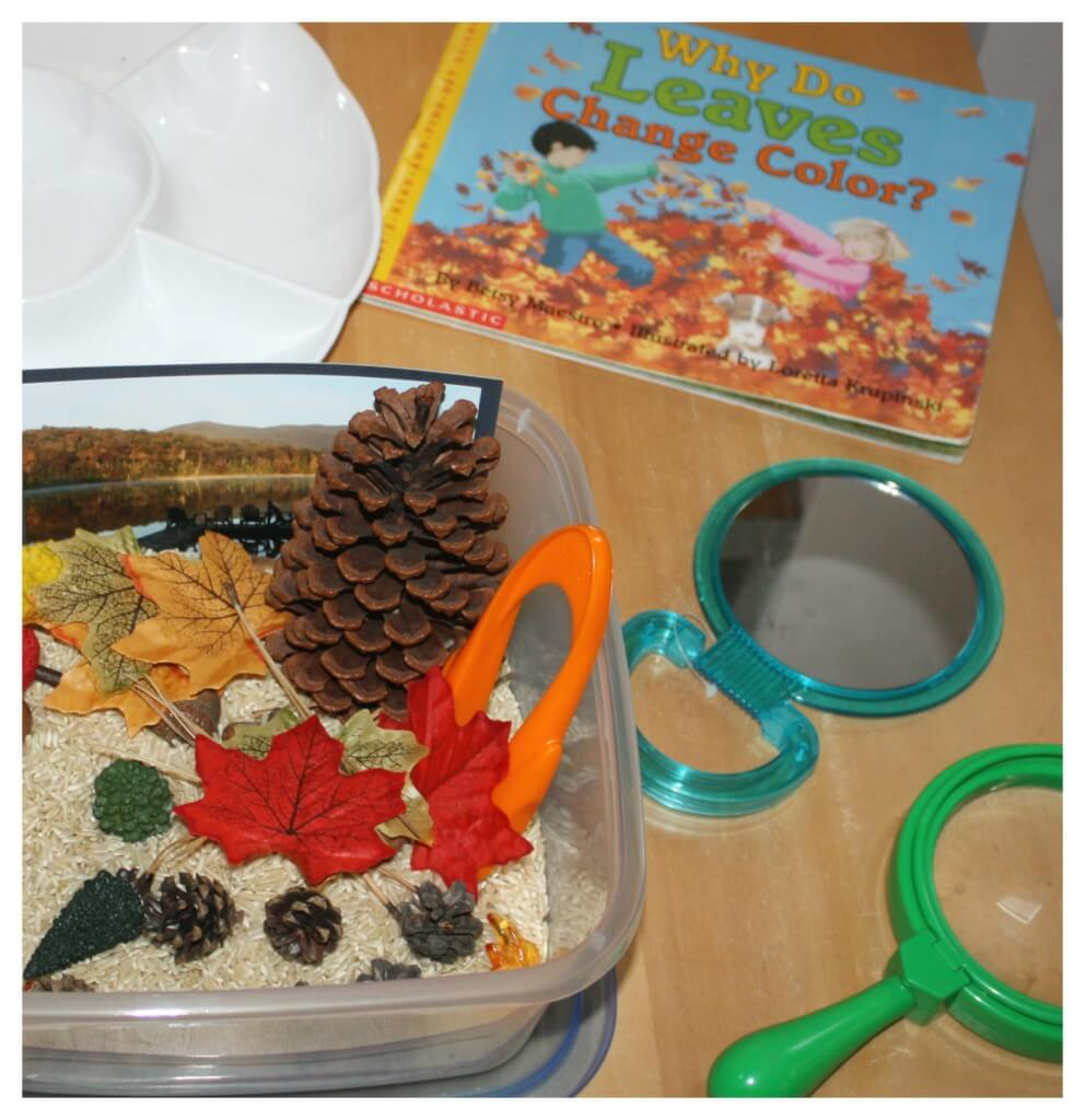 fall activity discovery table set up leaves changing book