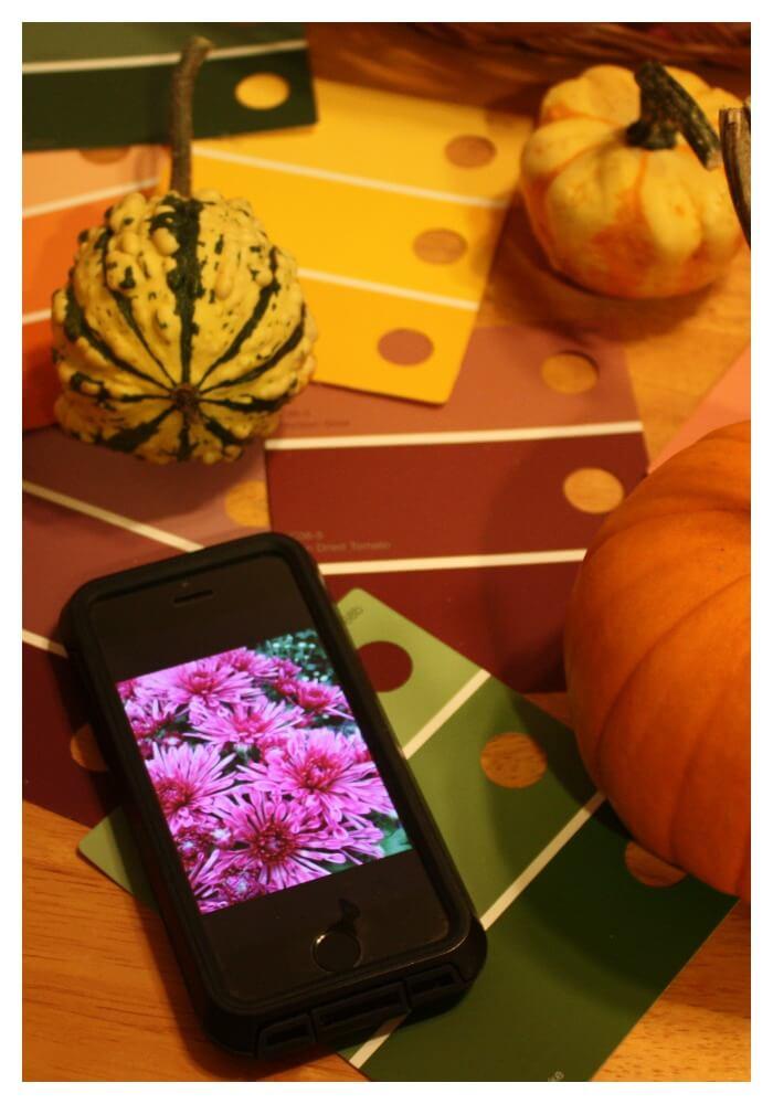 Exploring Fall Colors Using Photographs Playful Preschool