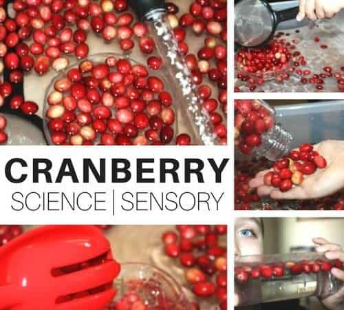 Quick Cranberry Science and Thanksgiving Sensory Play Activity