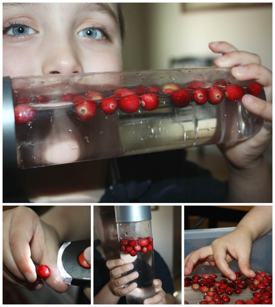 Cranberry Science Activity Floating cranberries