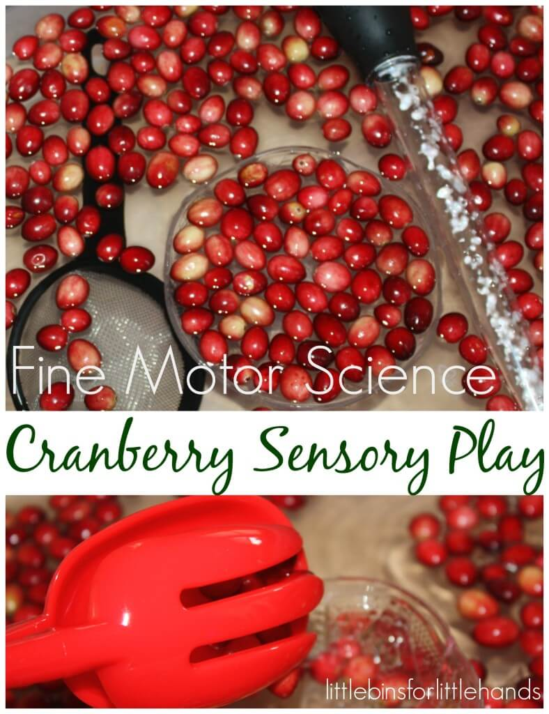 Cranberry Science Sensory Play With Fine Motor Skills