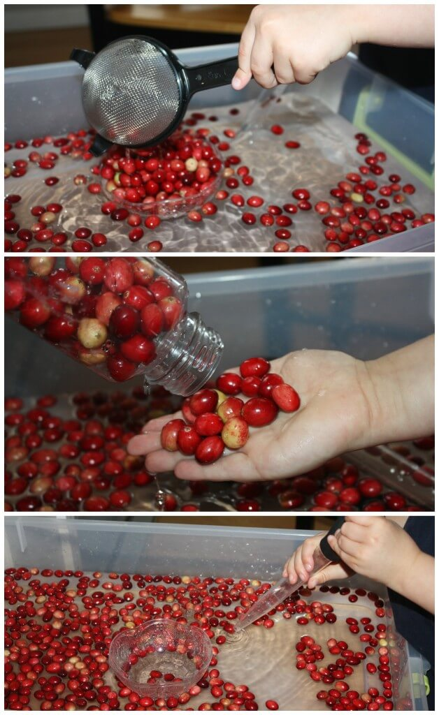 Cranberry Science Sensory Play With Fine Motor Tools