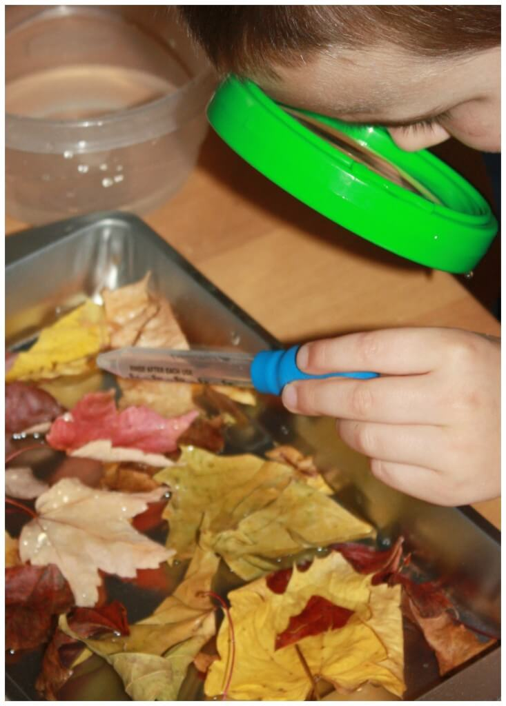 Leaf Activities Examining Leaves