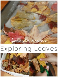 Leaf Activities Science and Fine Motor Skills Play