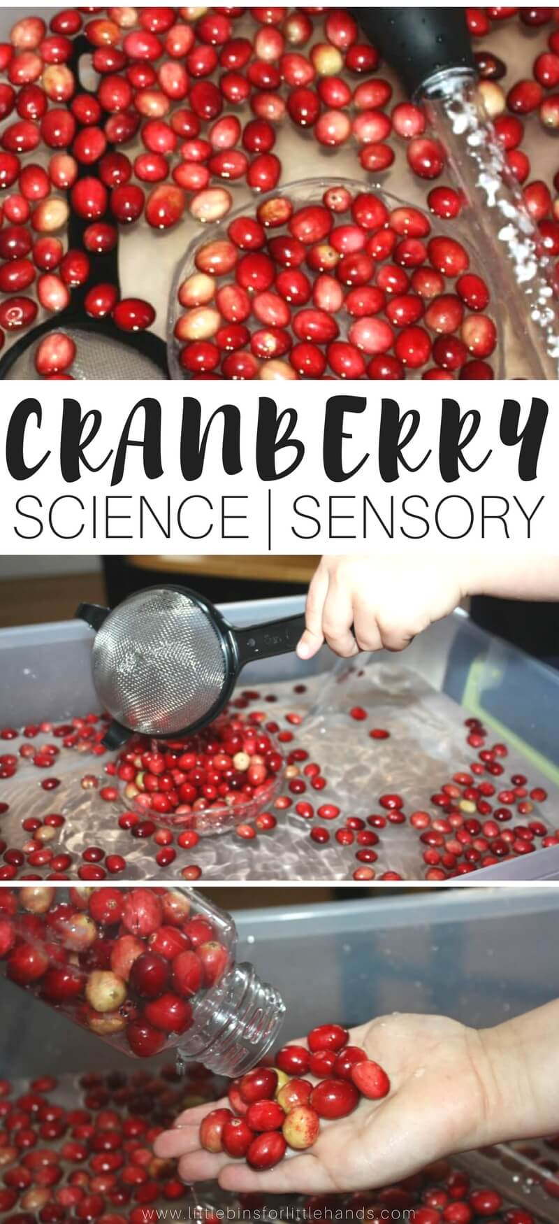 Cranberry Science Thanksgiving Activities Fine Motor Play