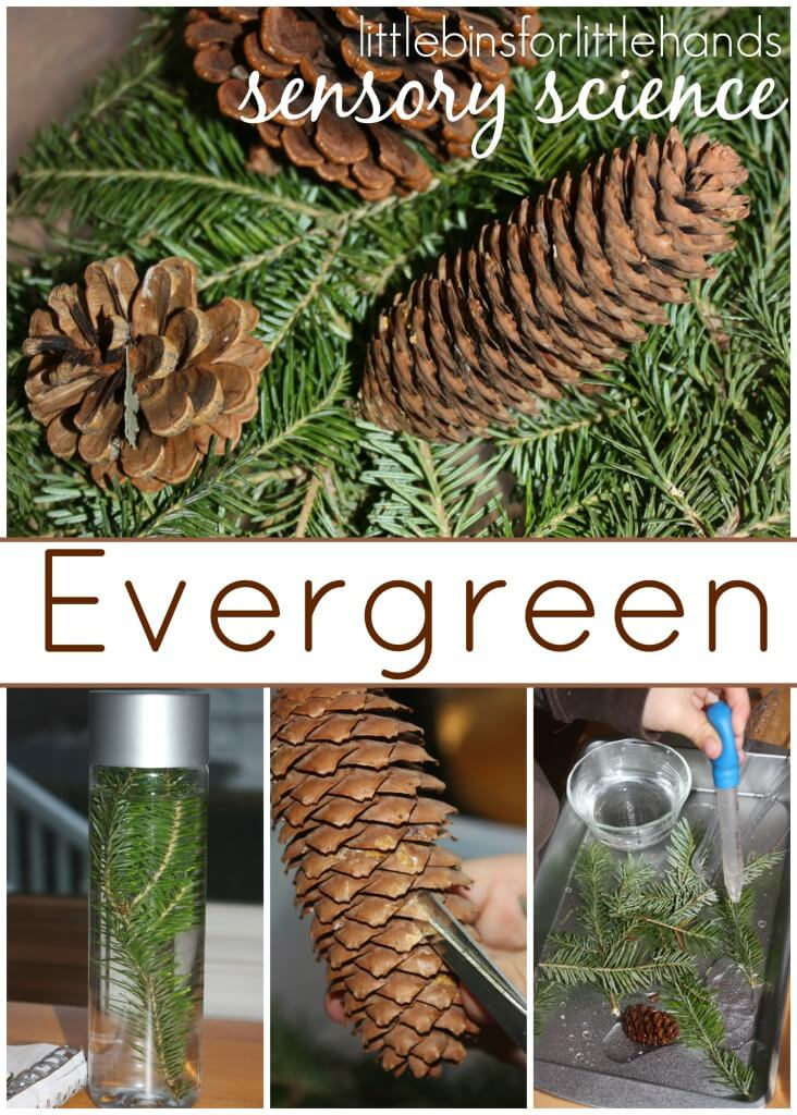 Evergreen Science Observation