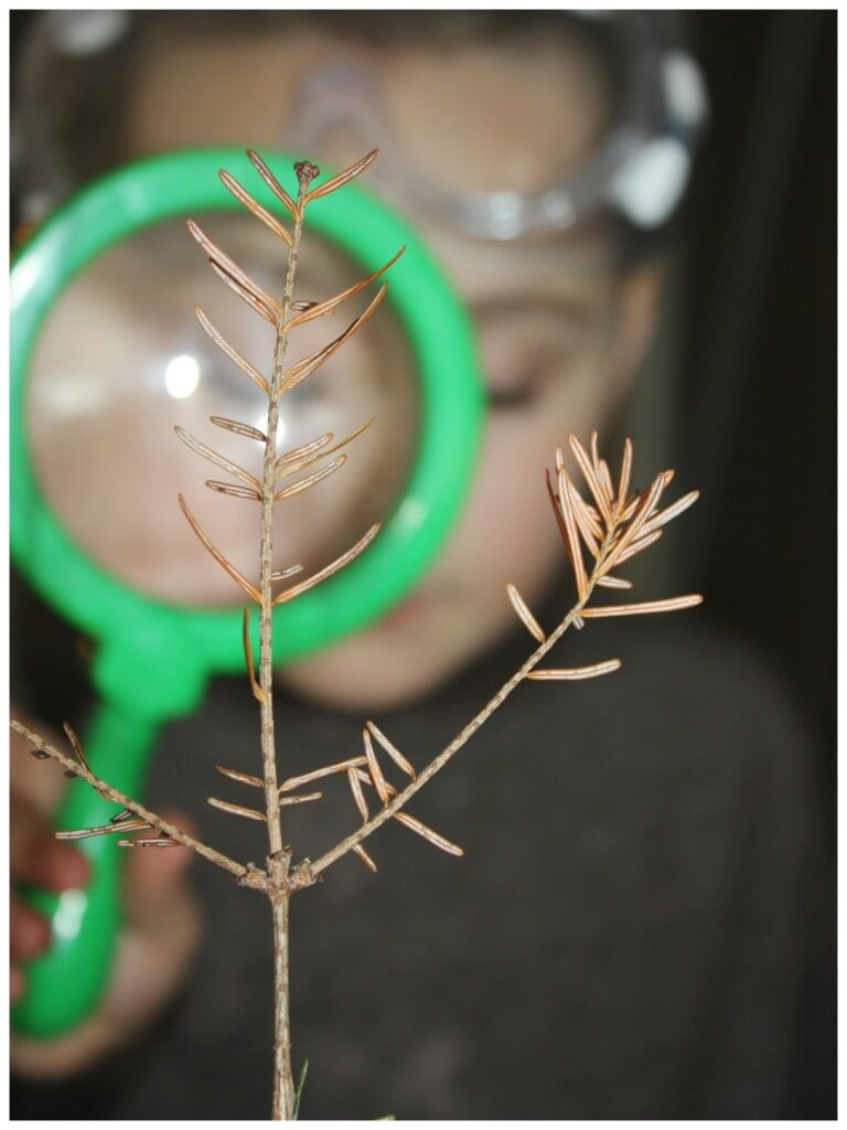 Evergreen Science Observing branches
