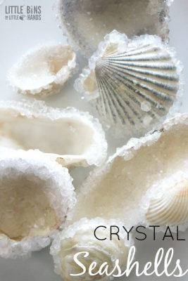 Crystal Seashells Borax Crystal Growing Science Experiment for Summer Science experiments and activities