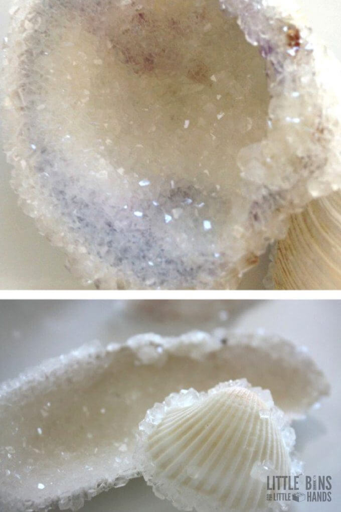 Crystal Seashells Borax Crystal Growing Experiment