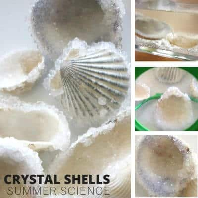 Crystal Seashells Borax Crystal Growing Science Experiment for Kids Summer Science