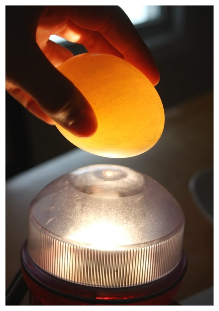Naked Egg Experiment See Through Egg Flashlight Test