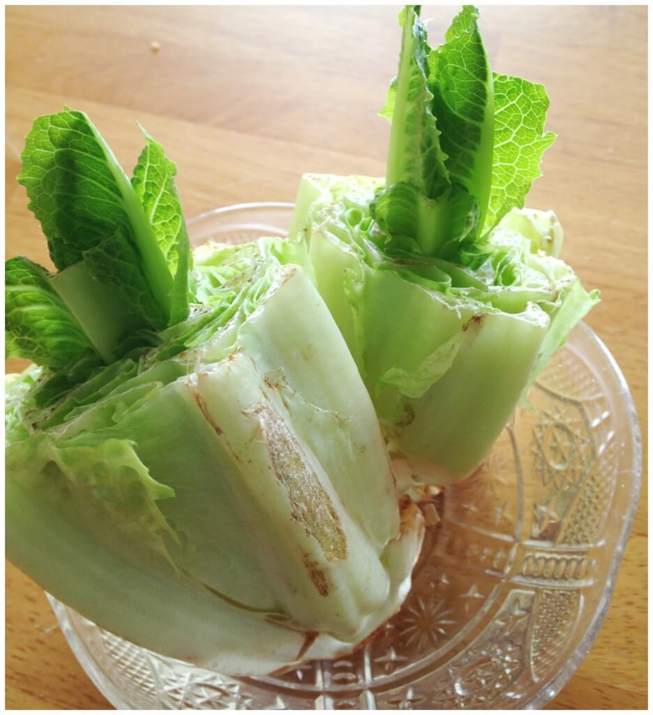 Growing Lettuce Activity Kitchen Science