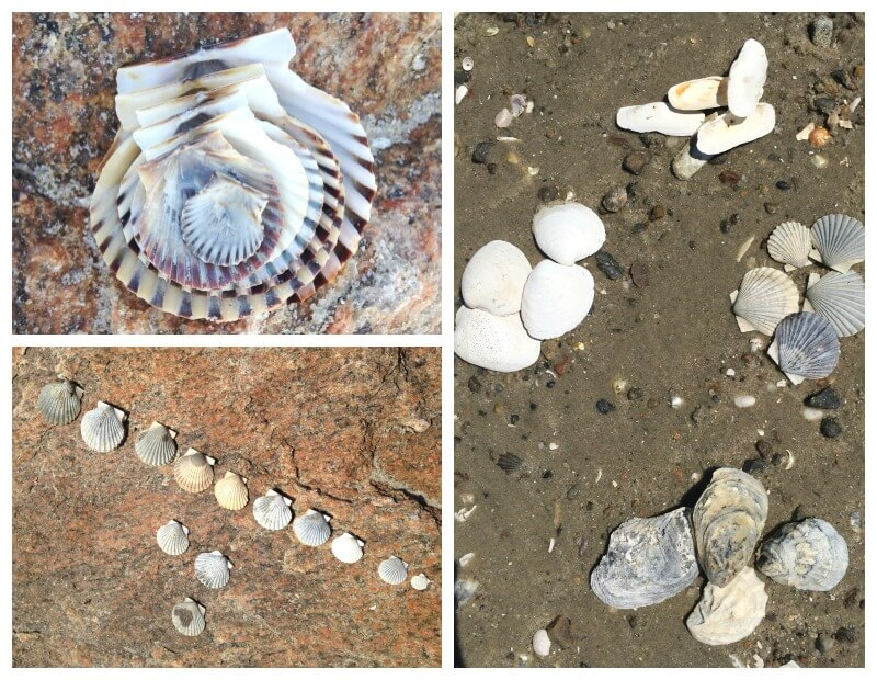 Beach Learning Activities Counting and Sorting Shells