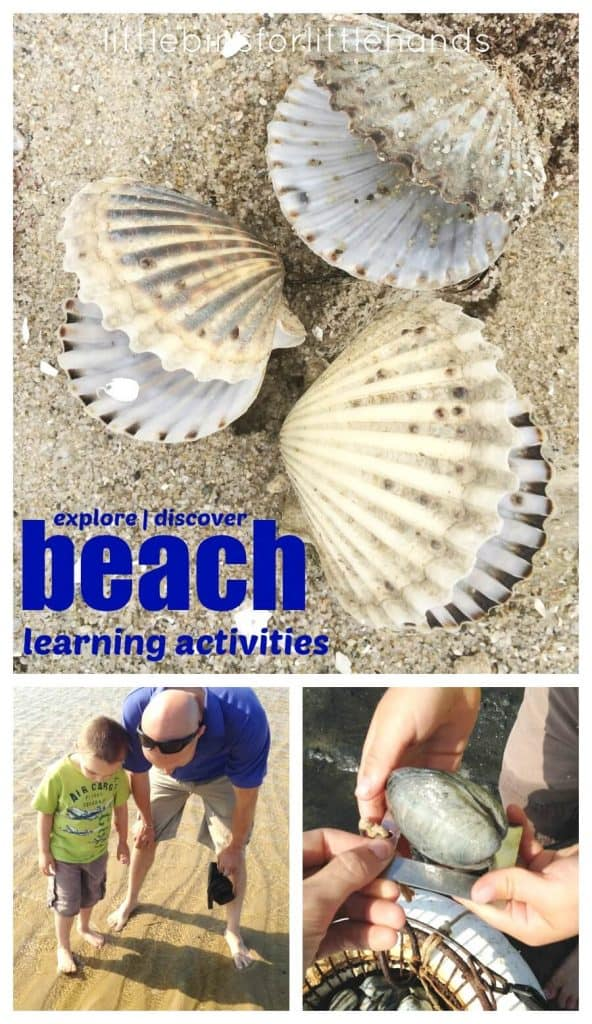 Beach Learning Activities for Kids