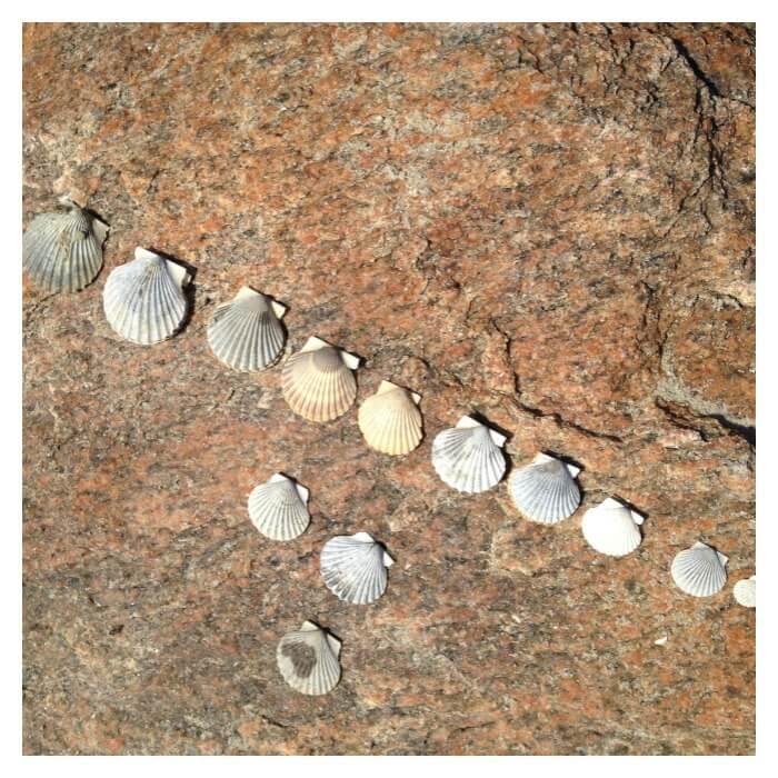 Seashells Math Activity Sizing Shells from biggest to littlest