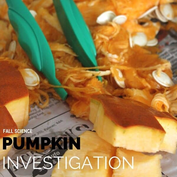 parts of a pumpkin for Thanksgiving Science Activities
