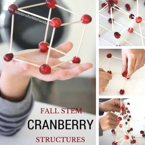 cranberry-structures-for-fall-stem-and-thanksgiving-engineering